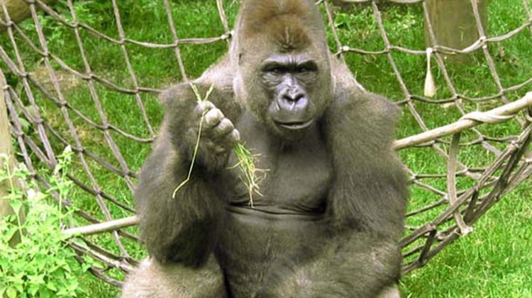 Henry Vilas Zoo Trip