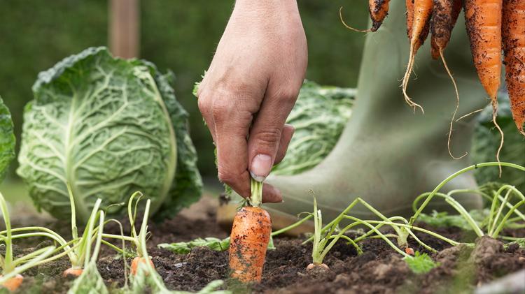 Organic Gardening: ACS Life Skills Series